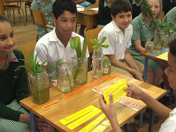 Bergvliet-Primary-School-web-lesson